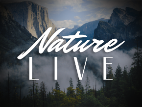 Nature Live - Screensavers